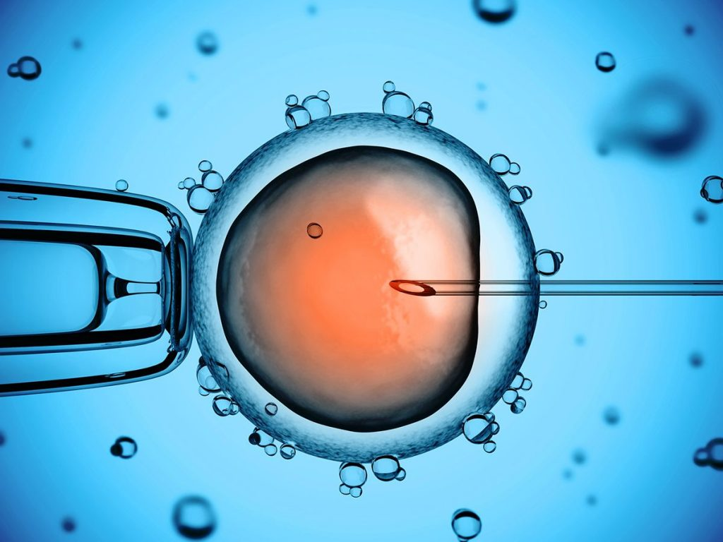 Sperm injected into egg, ICSI dish